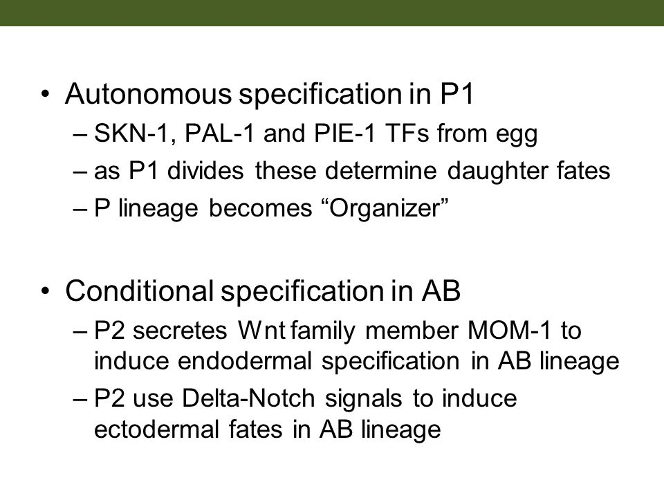 Autonomous specification in P1