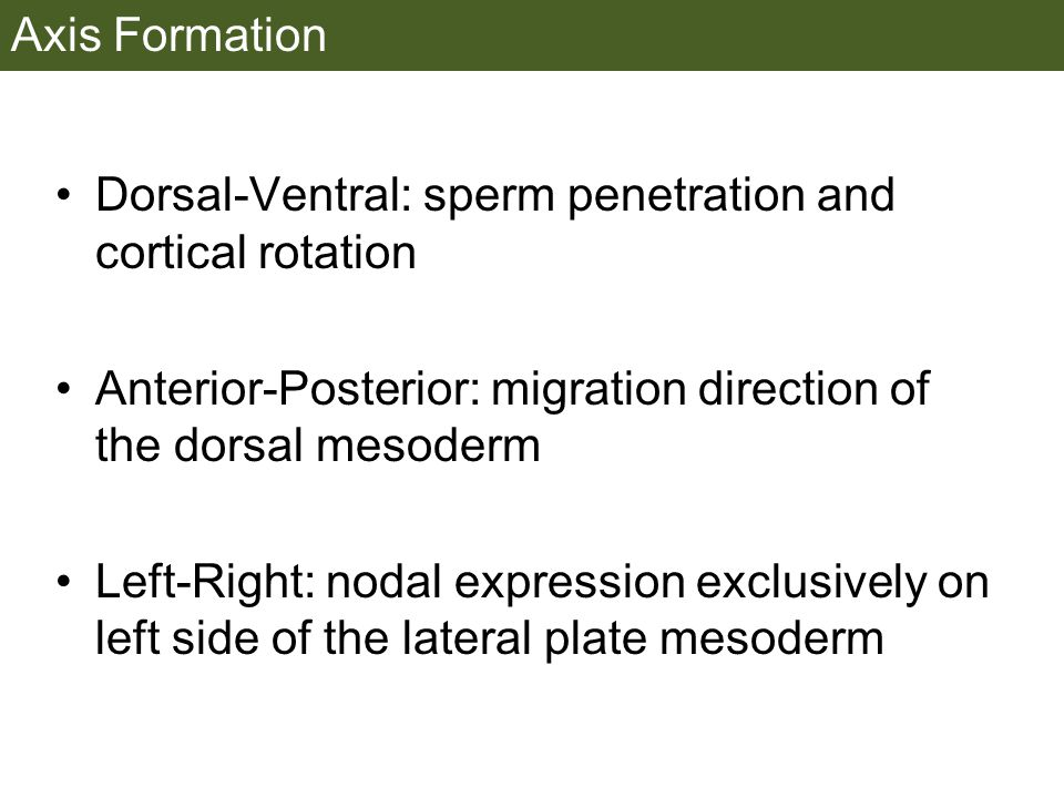 Axis Formation Dorsal-Ventral: sperm penetration and cortical rotation. Anterior-Posterior: migration direction of the dorsal mesoderm.