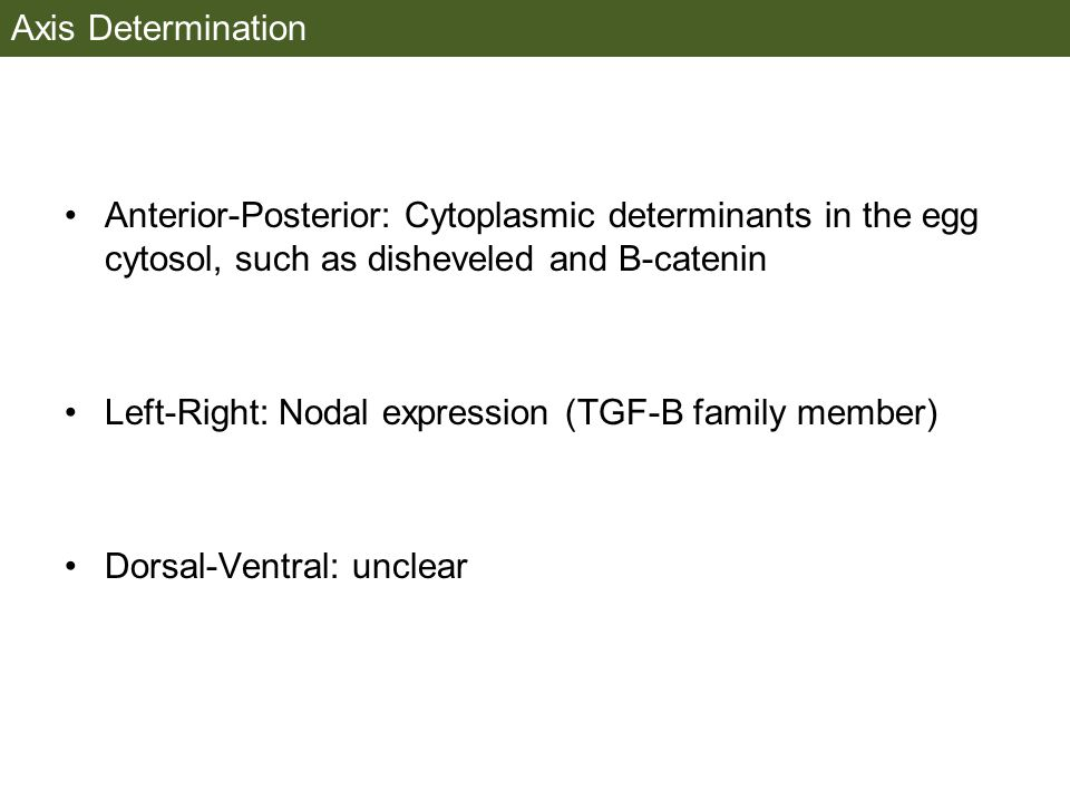 Axis Determination Anterior-Posterior: Cytoplasmic determinants in the egg cytosol, such as disheveled and B-catenin.
