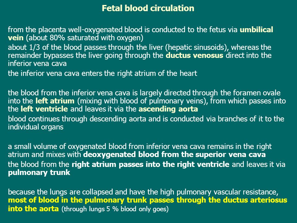 Fetal blood circulation