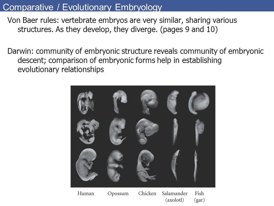 Comparative / Evolutionary Embryology