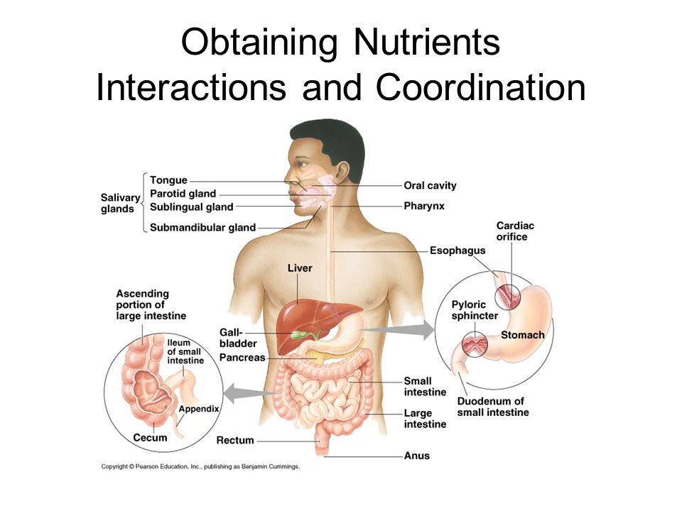Obtaining Nutrients Interactions and Coordination