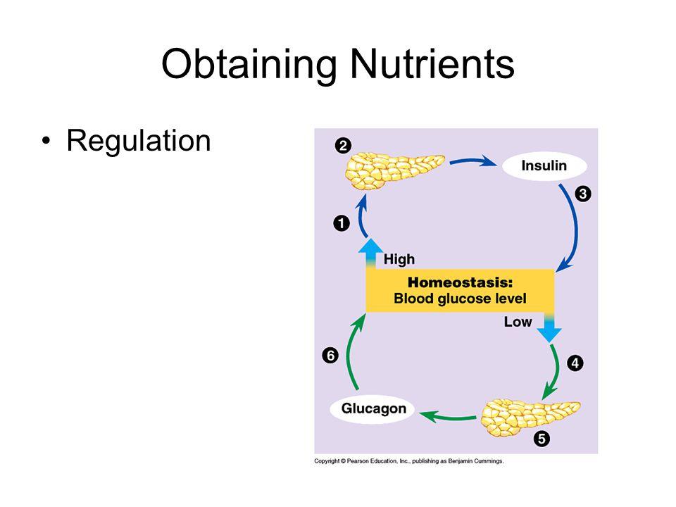 Obtaining Nutrients Regulation
