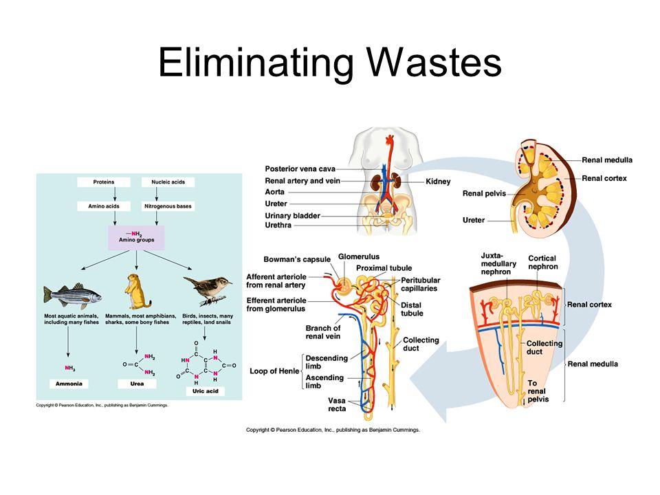 Eliminating Wastes
