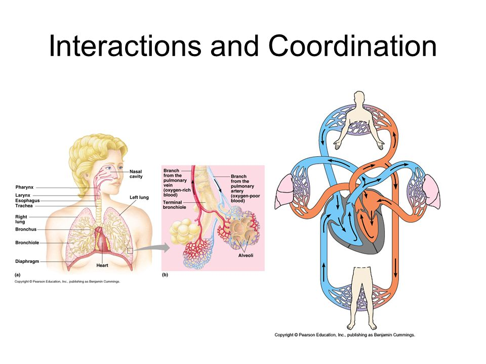 Interactions and Coordination