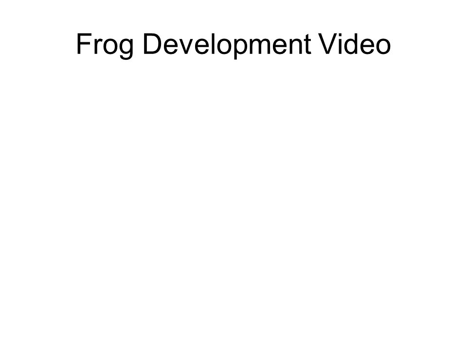 Frog Development Video