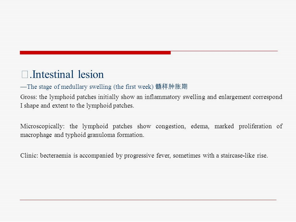 Ⅰ.Intestinal lesion —The stage of medullary swelling (the first week) 髓样肿胀期.