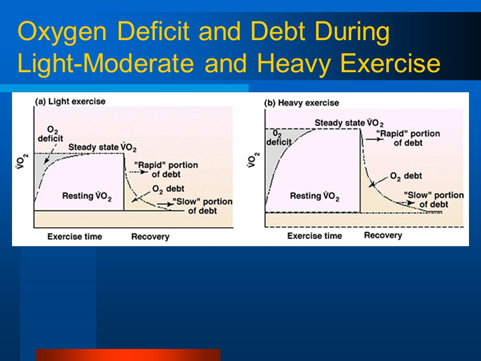 Oxygen Deficit and Debt During Light-Moderate and Heavy Exercise