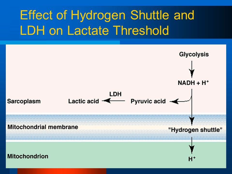 Effect of Hydrogen Shuttle and LDH on Lactate Threshold