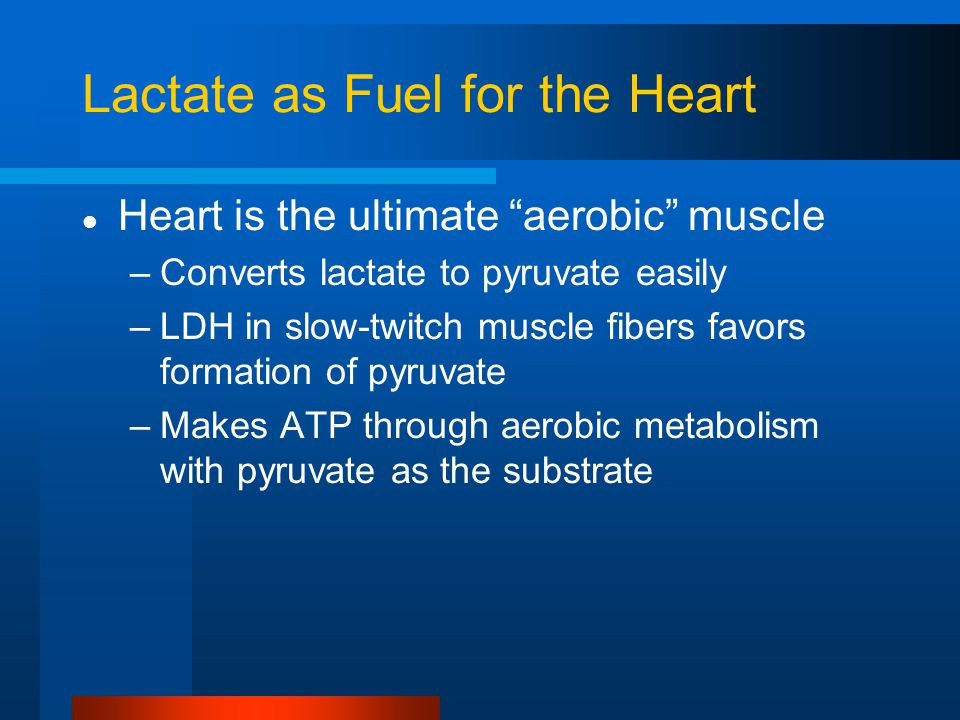 Lactate as Fuel for the Heart