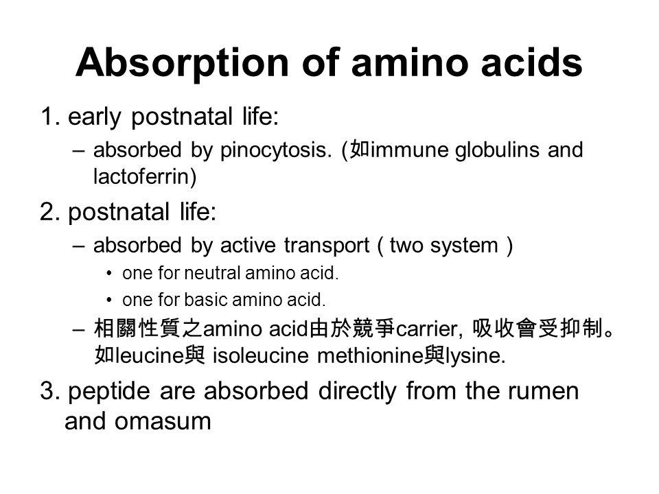 Absorption of amino acids