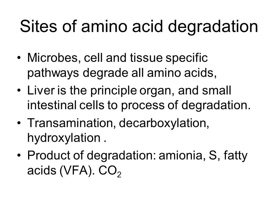 Sites of amino acid degradation