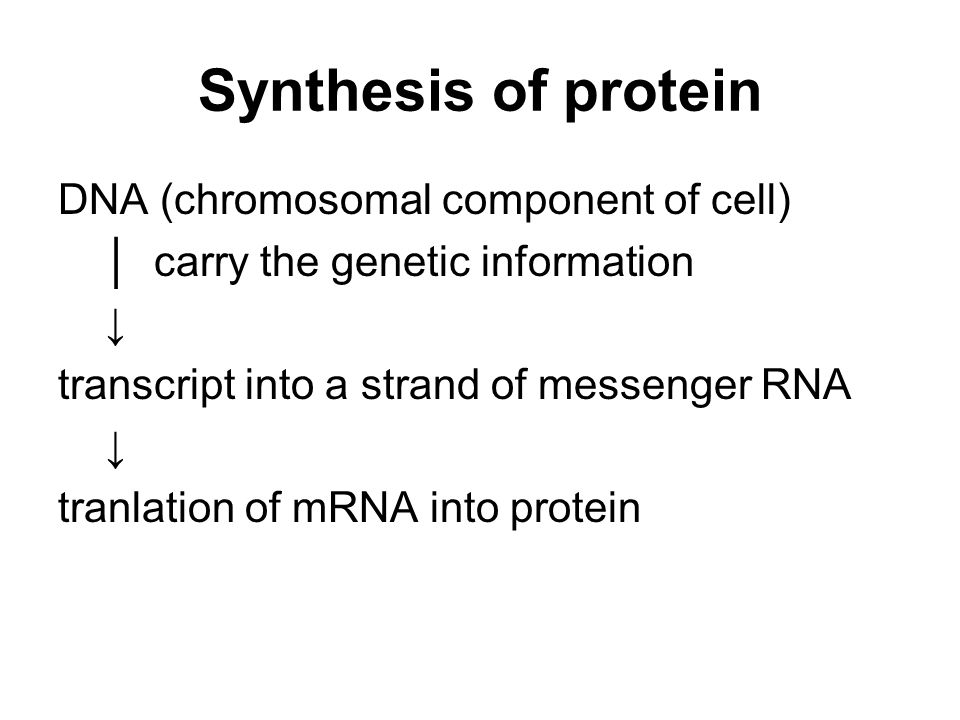 Synthesis of protein DNA (chromosomal component of cell)