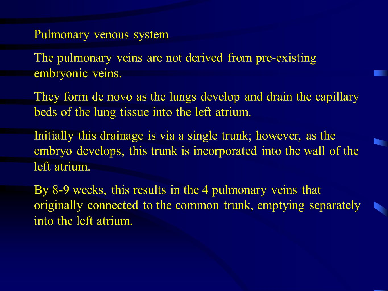 Pulmonary venous system