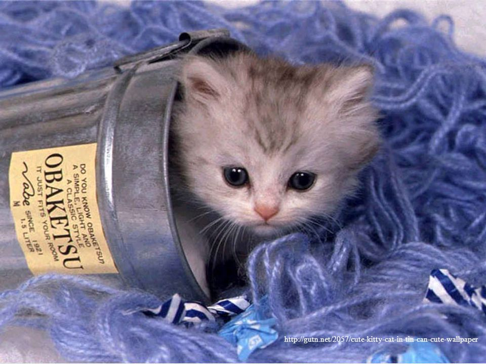 http://gutn.net/2057/cute-kitty-cat-in-tin-can-cute-wallpaper