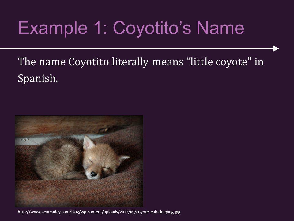 Example 1: Coyotito's Name