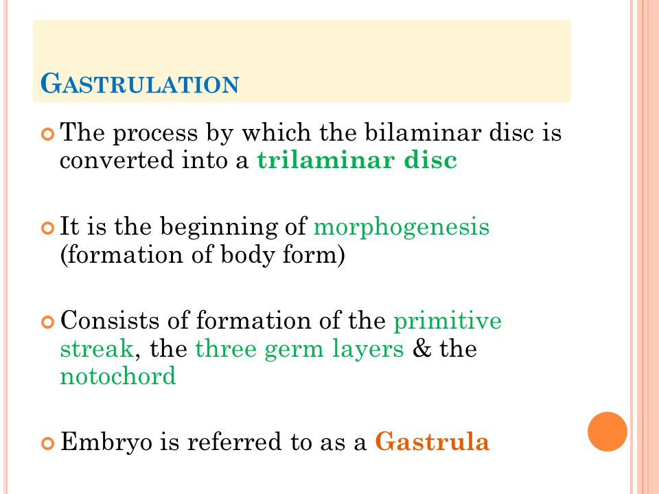 Gastrulation The process by which the bilaminar disc is converted into a trilaminar disc.