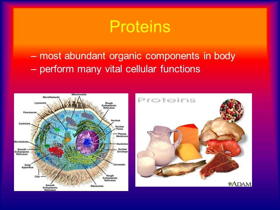 Proteins most abundant organic components in body