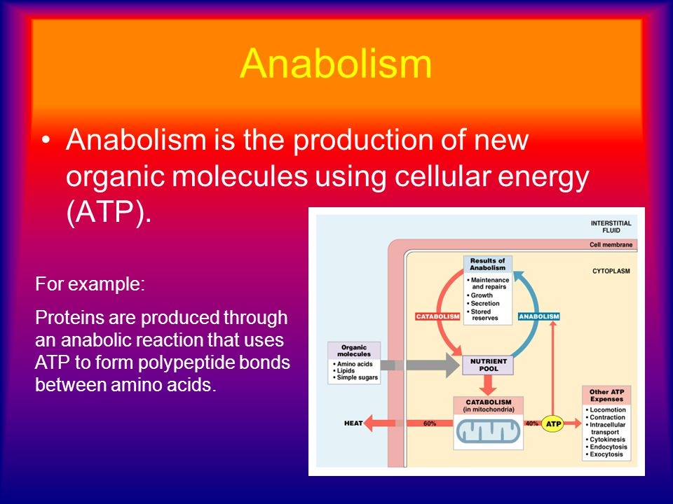 Anabolism Anabolism is the production of new organic molecules using cellular energy (ATP). For example: