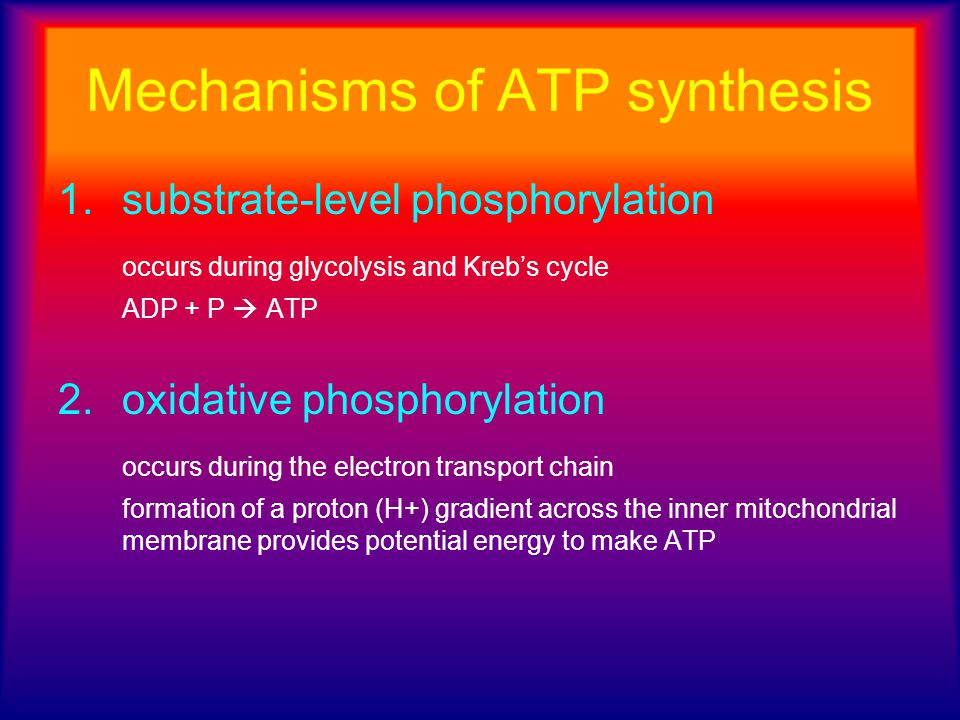 Mechanisms of ATP synthesis
