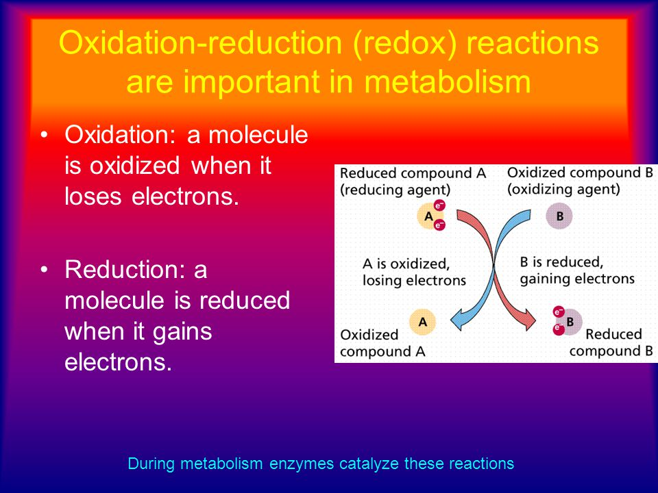 Oxidation-reduction (redox) reactions are important in metabolism