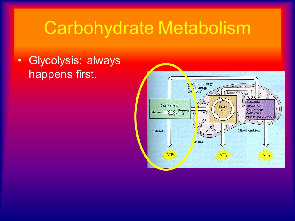 Carbohydrate Metabolism