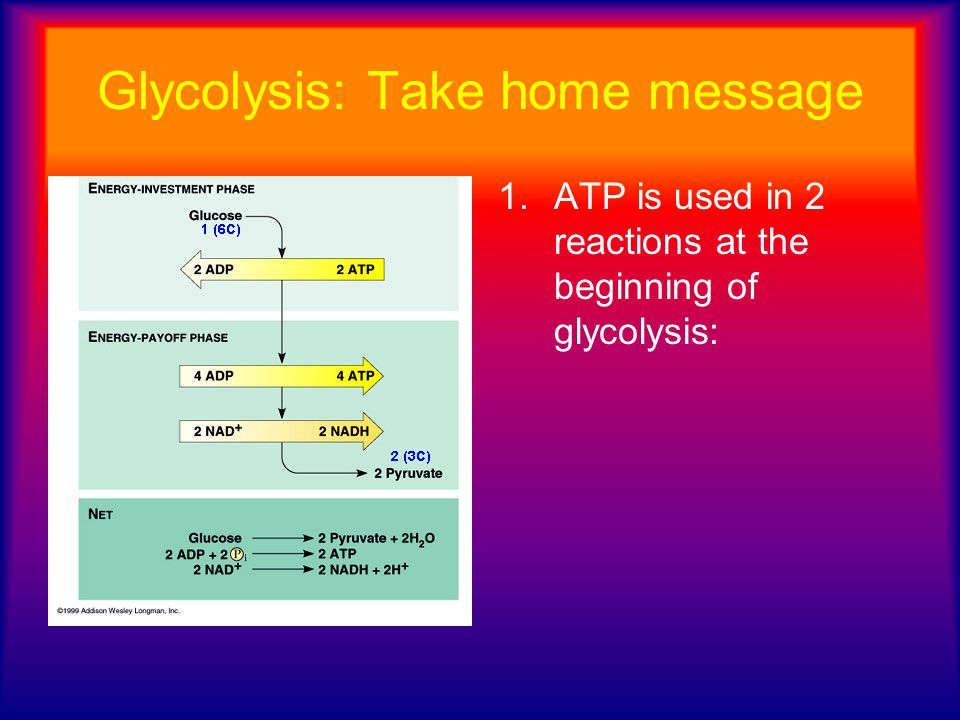 Glycolysis: Take home message