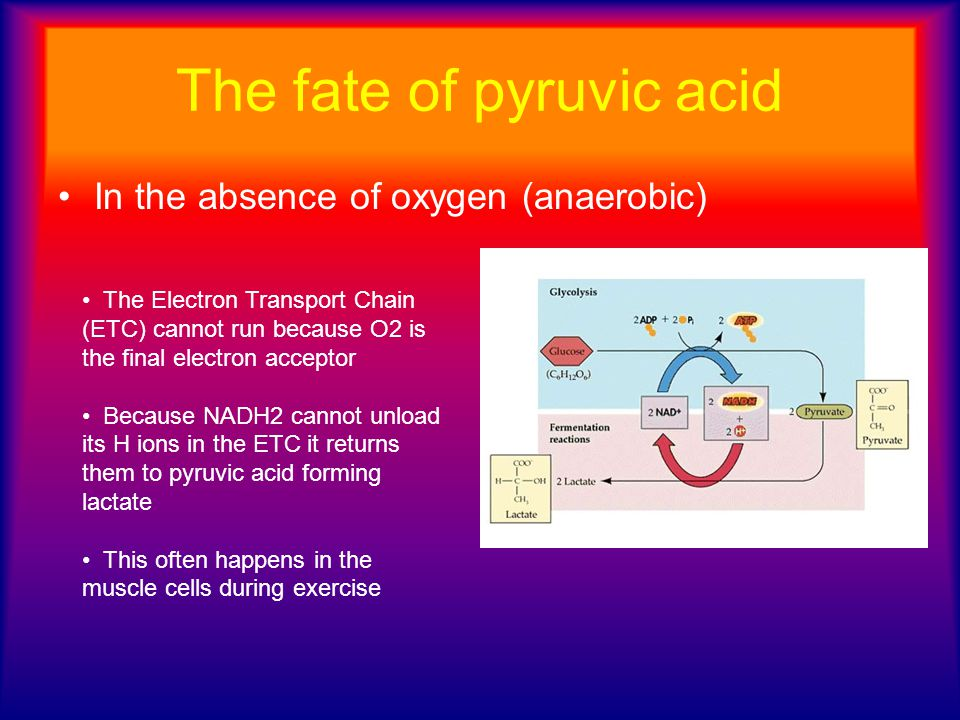 The fate of pyruvic acid