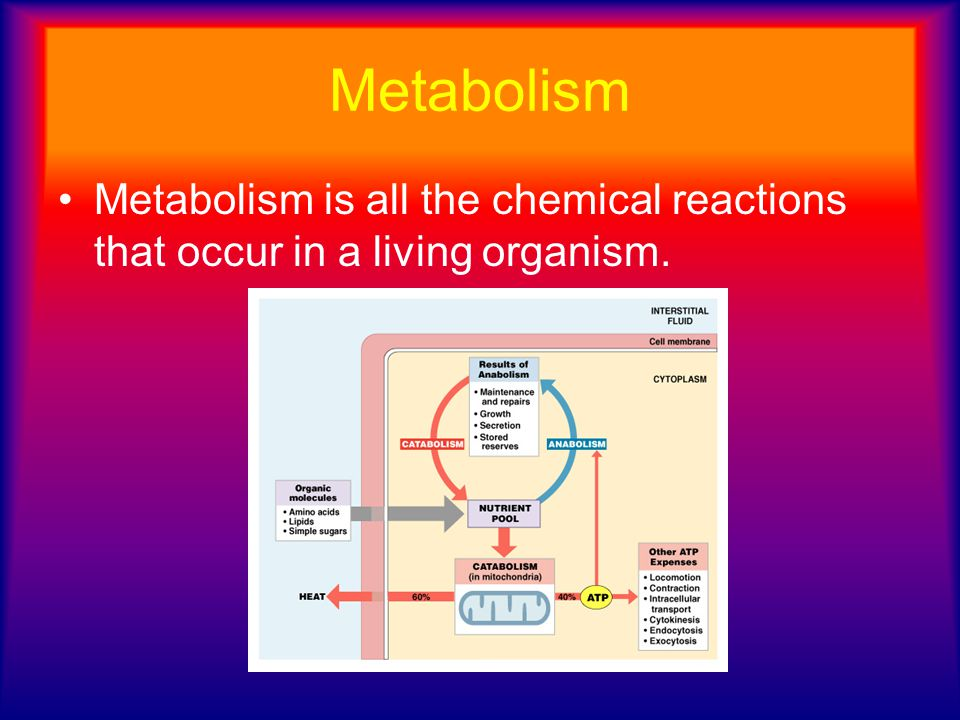 Metabolism Metabolism is all the chemical reactions that occur in a living organism.