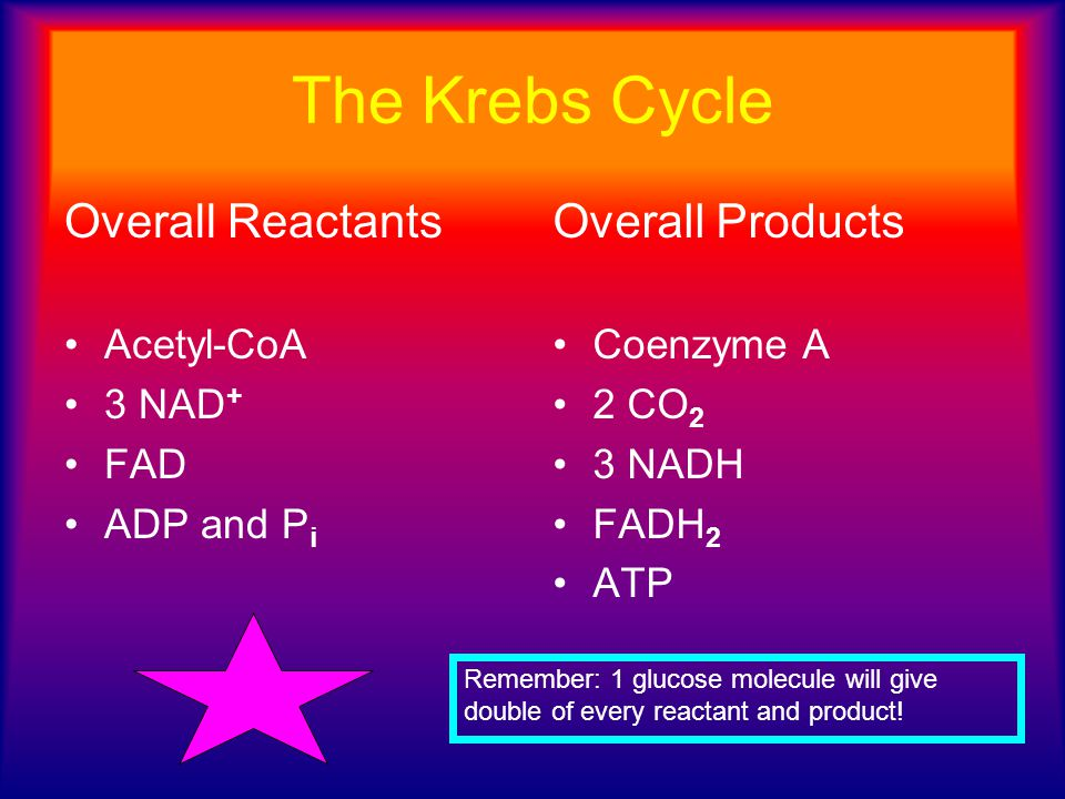 The Krebs Cycle Overall Reactants Overall Products Acetyl-CoA 3 NAD+