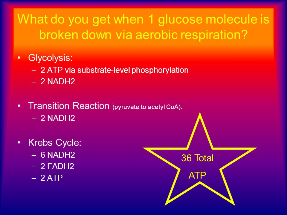What do you get when 1 glucose molecule is broken down via aerobic respiration