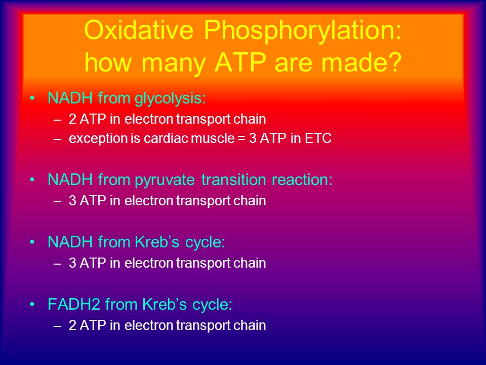 Oxidative Phosphorylation: how many ATP are made