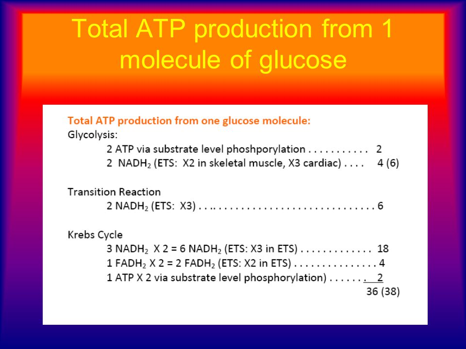 Total ATP production from 1 molecule of glucose