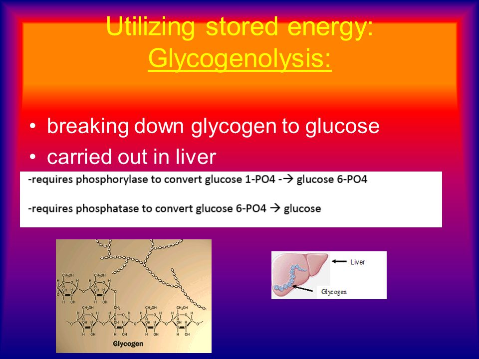 Utilizing stored energy: Glycogenolysis: