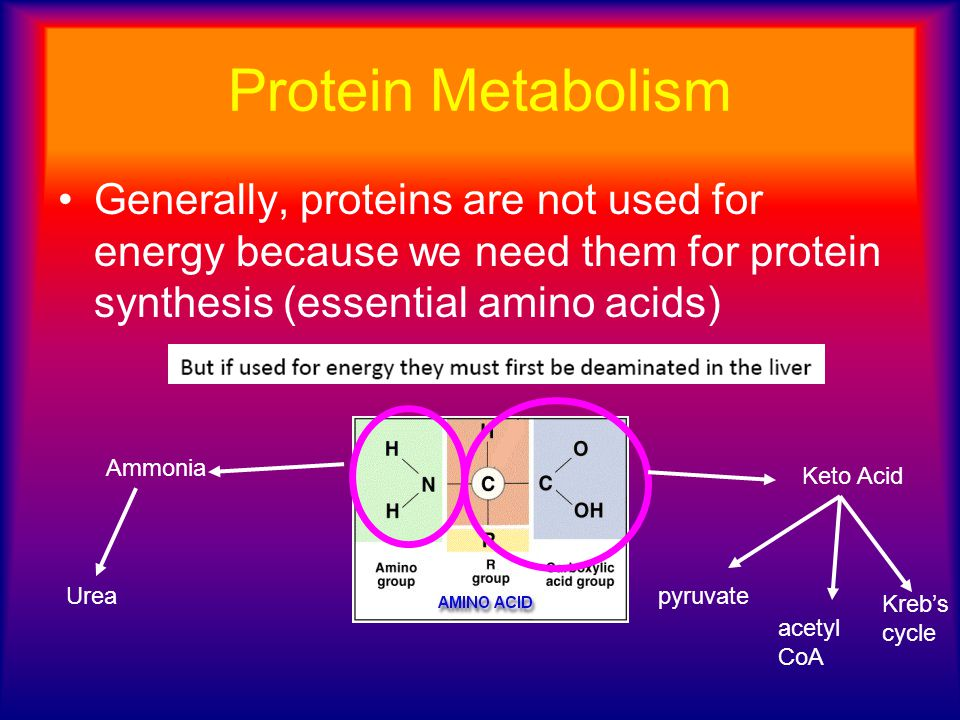 Protein Metabolism Generally, proteins are not used for energy because we need them for protein synthesis (essential amino acids)