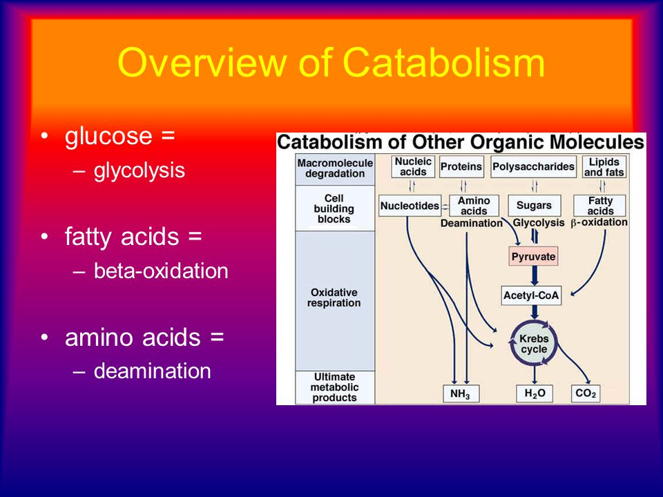 Overview of Catabolism