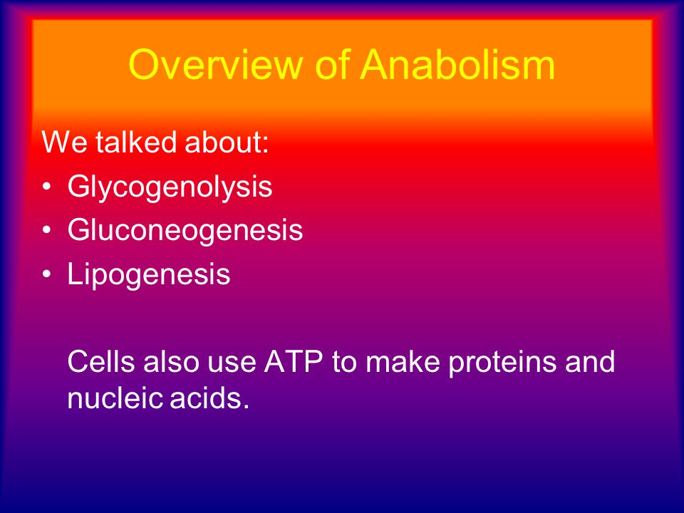 Overview of Anabolism We talked about: Glycogenolysis Gluconeogenesis