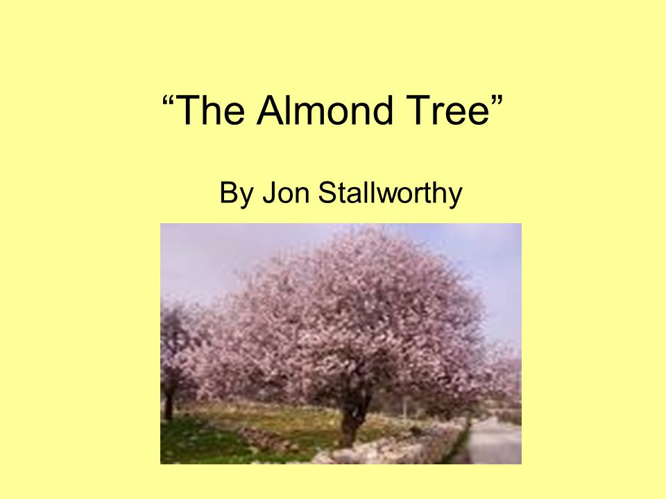 The Almond Tree By Jon Stallworthy