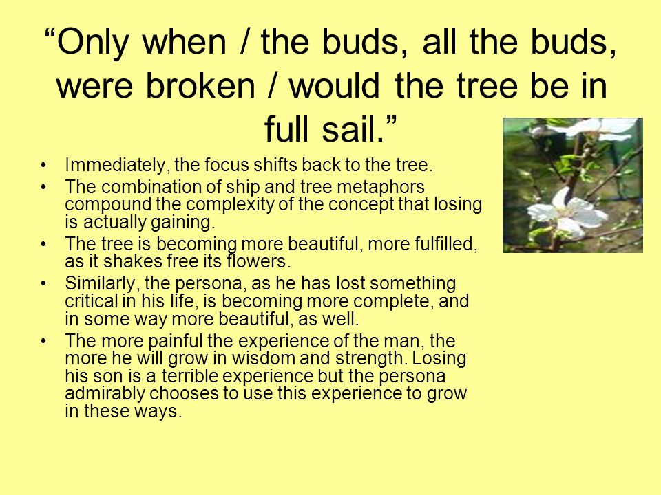 Only when / the buds, all the buds, were broken / would the tree be in full sail.