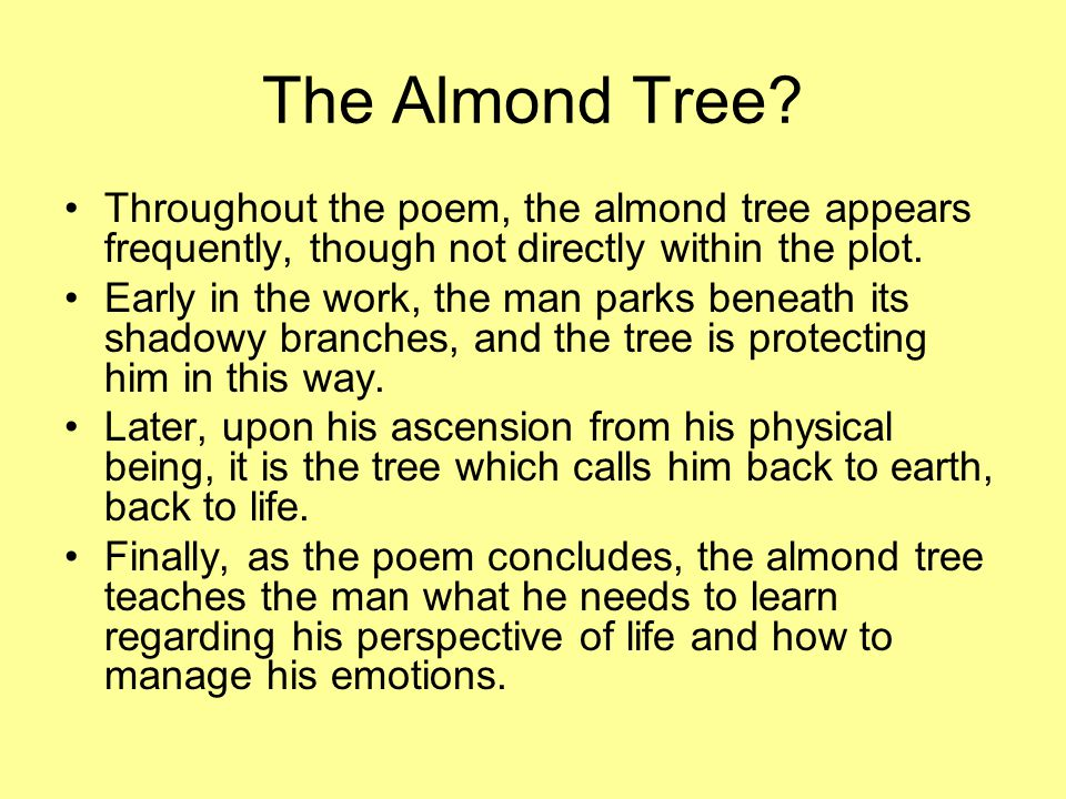 The Almond Tree Throughout the poem, the almond tree appears frequently, though not directly within the plot.