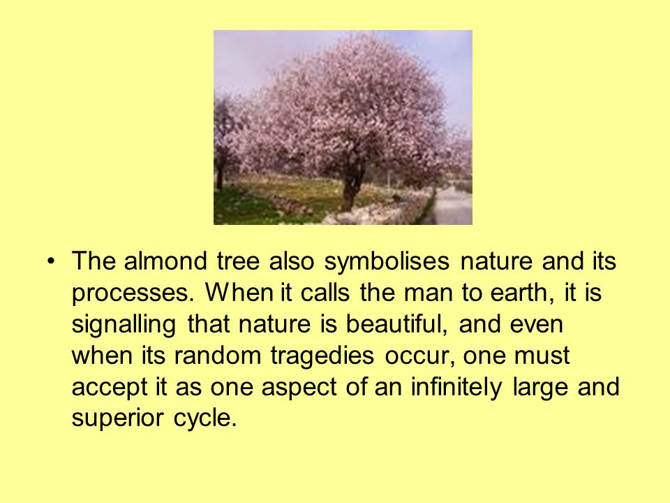 The almond tree also symbolises nature and its processes