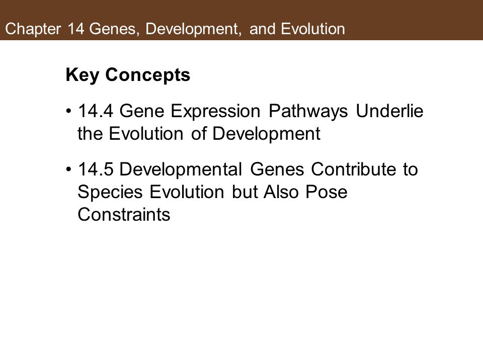 Chapter 14 Genes, Development, and Evolution