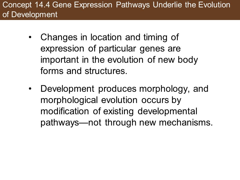 Concept 14.4 Gene Expression Pathways Underlie the Evolution of Development