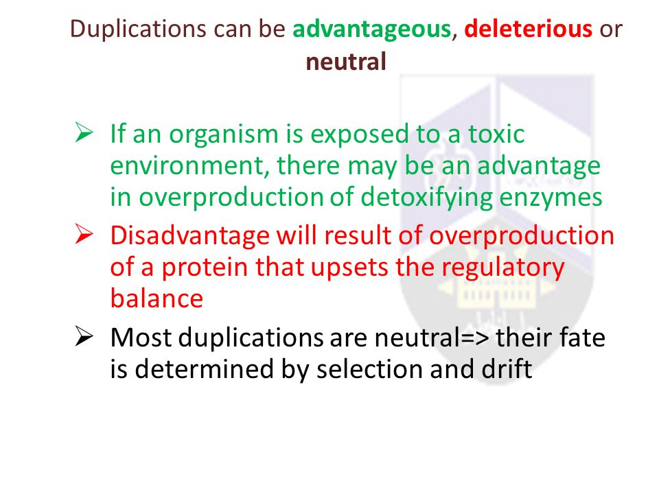 Duplications can be advantageous, deleterious or neutral