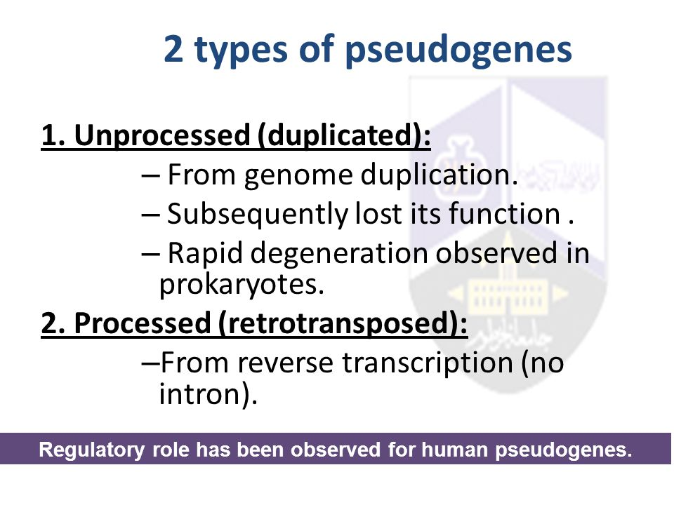 Regulatory role has been observed for human pseudogenes.