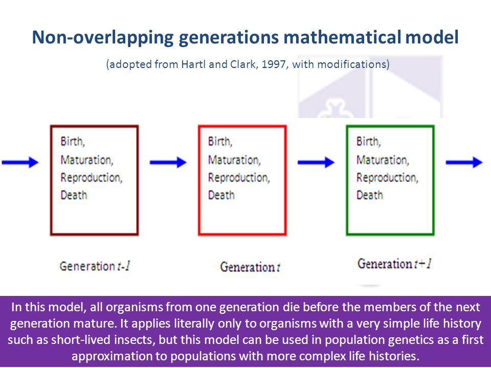 Non-overlapping generations mathematical model (adopted from Hartl and Clark, 1997, with modifications)