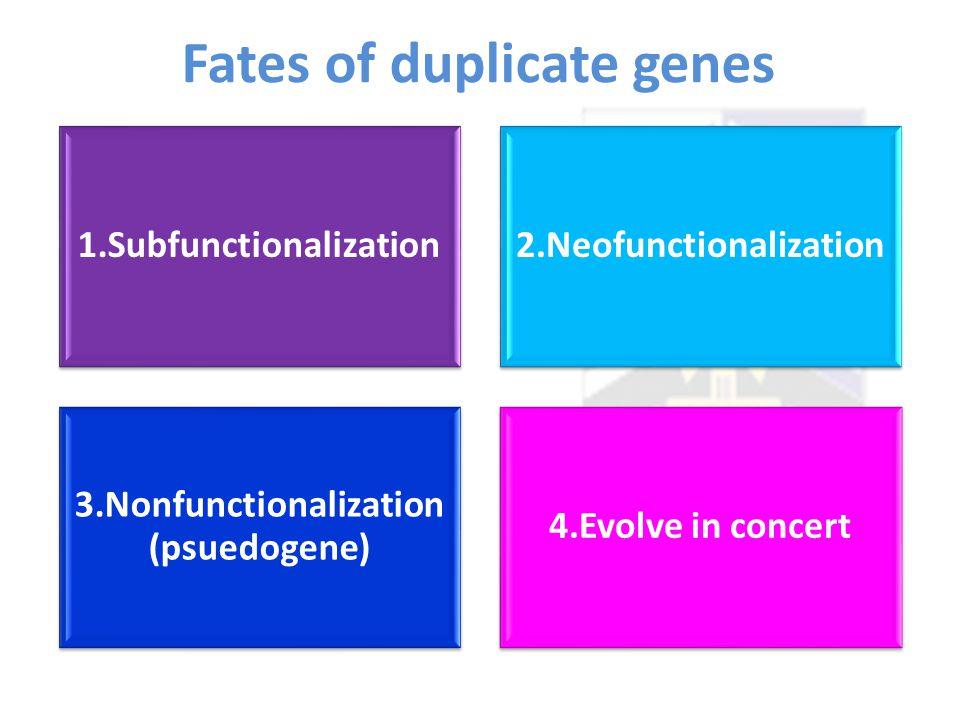 Fates of duplicate genes