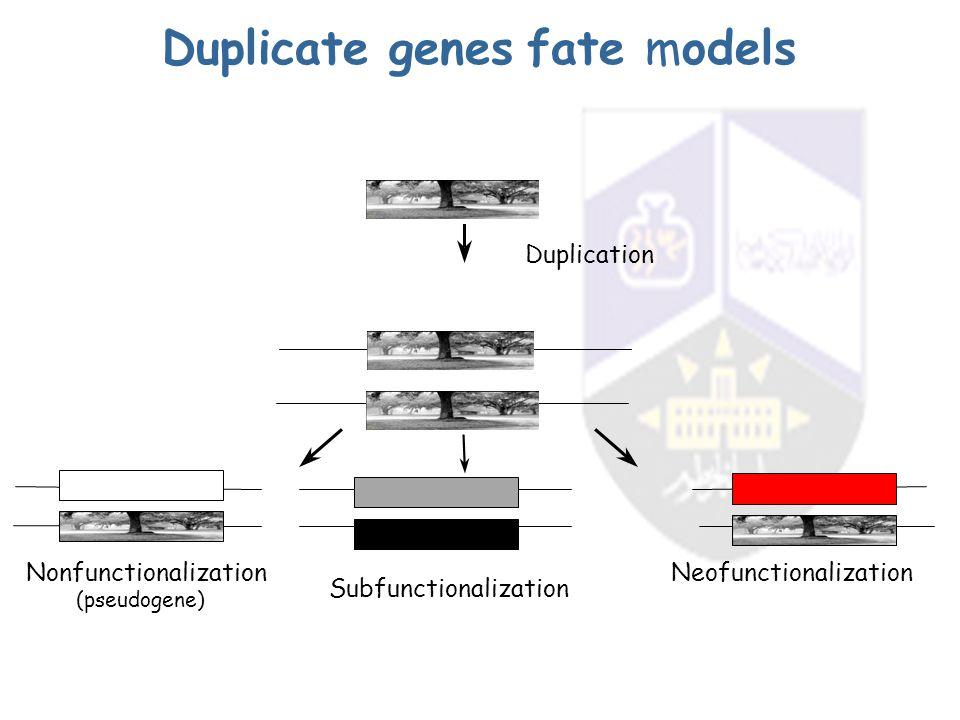 Duplicate genes fate models