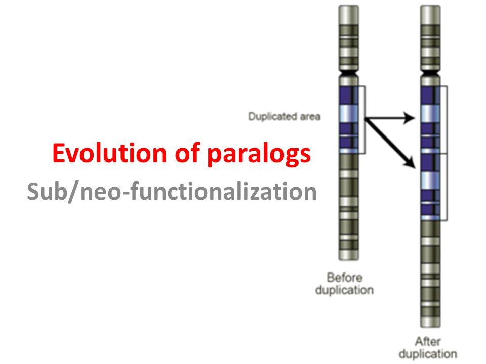Sub/neo-functionalization
