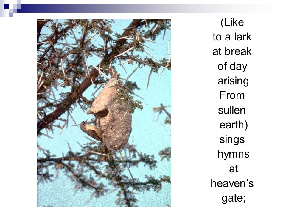 (Like to a lark at break of day arising From sullen earth) sings hymns at heaven's gate;